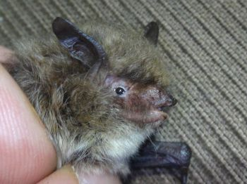 Sus Professor Confirms Rare Bat Species Spotted For First Time In Wiltshire Broadcast News Items University Of