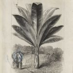 Dalziel, unidentified illustration (1868)