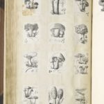 Dalziel, illustrations for W Robinson, Mushroom Culture