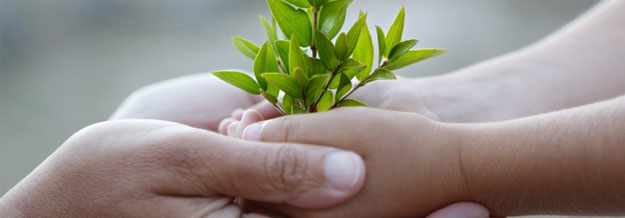 adult and child hands holding a plant