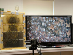 TV camera and observation hive