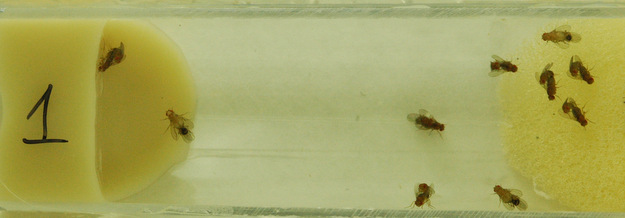 flies on a vial
