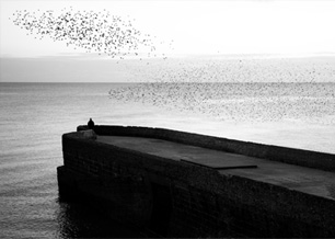 pier with starlings flying in sky