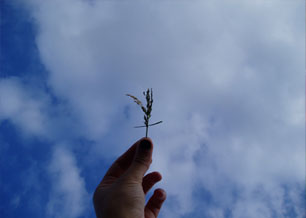 Hand holding grass against blue sky