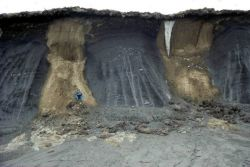 Permafrost structures: sand and ice wedges