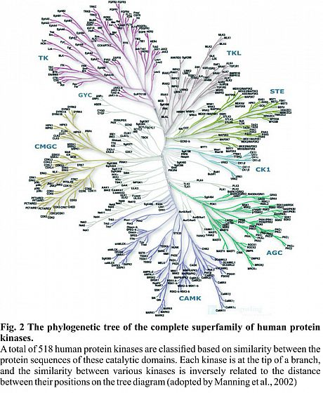 kinome tree, manning et al.