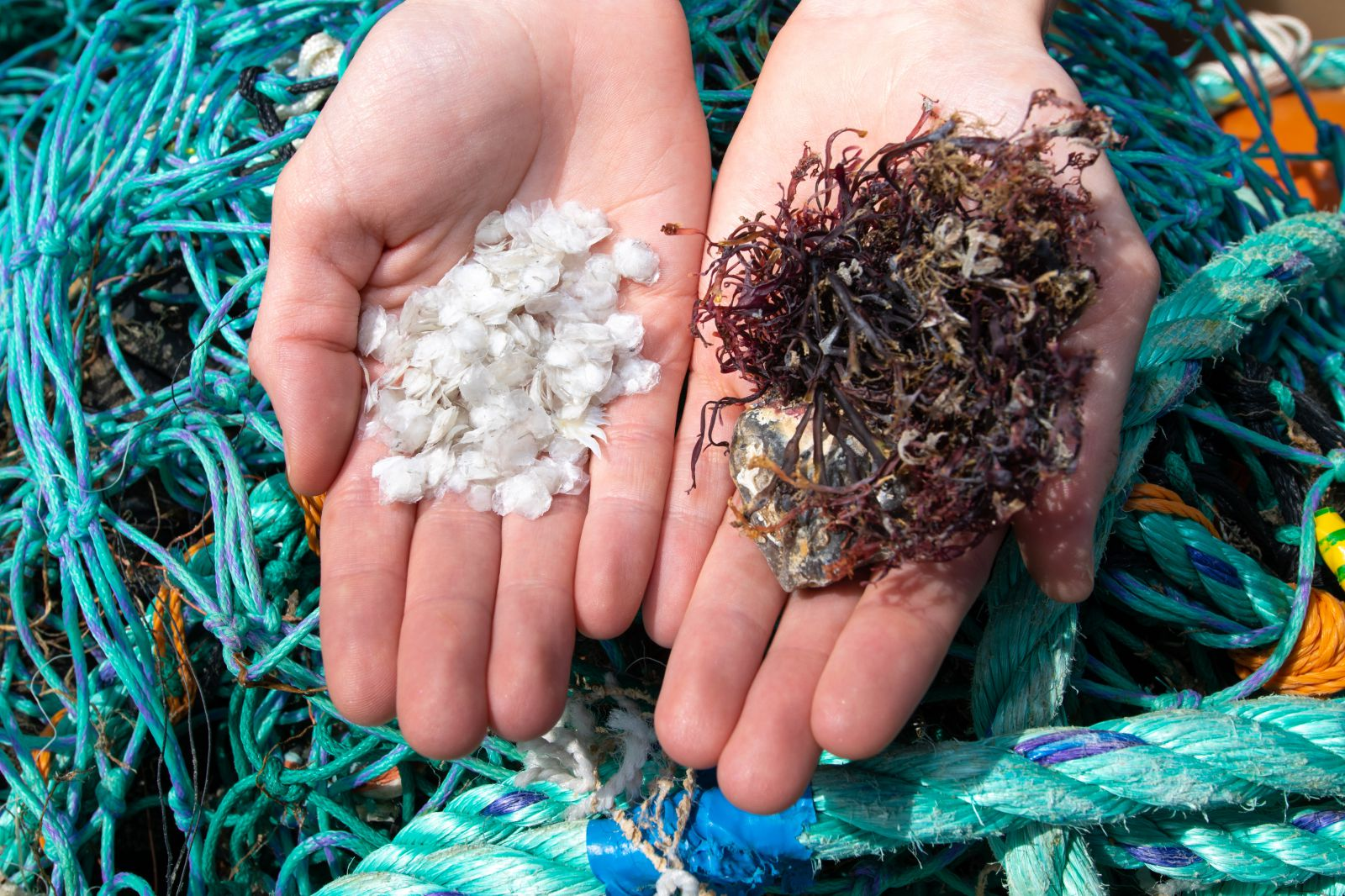 Lucy holds materials used in her product, fish scales and seaweed