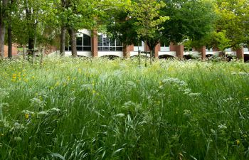 An image of the University of Sussex campus with a red brick building hidden behind tall grass and trees