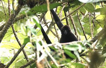 Monkey hidden in the jungle