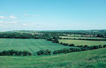 Green agricultural fields with hedges; blue sky
