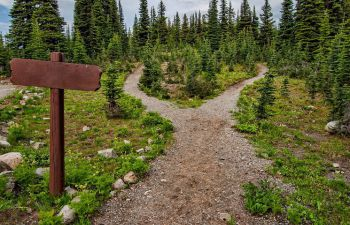 Two paths opening into a perennial forest
