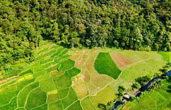 Eagle eye's view of a green landscape: division between agricultural fields and a forest