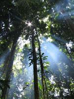 Rainforest, Papua New Guinea