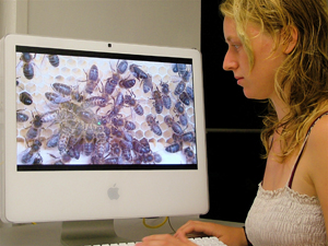 JRA student Heather Moore observing egg-laying behaviour of queen bees