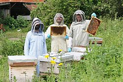Researchers standing next to honey bee colonies testing for hygienic behaviour