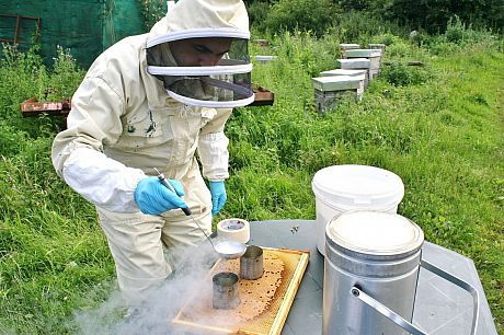 Researcher testing a honey bee colony for genetic trait.