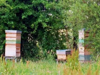 The Apiary at College Farm, Duxford