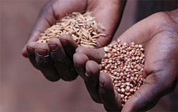 A person's hands holding grains and seeds
