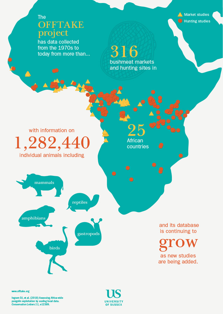 The OFFTAKE project has collected data from the 1970s to today from more than 316 bushmeat markets and hunting site in 25 African countries with information on 1,282,440 individual animals, including mammals, reptiles, amphibians, gastropods and birds.